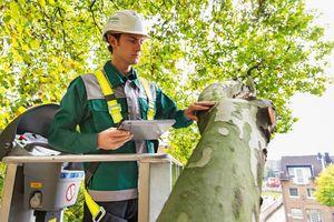Baumkontrollen sollten grundsätzlich von einem Fachmann vorgenommen werden