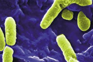 Legionellen haben für die Vermehrung ein optimales Temperaturfenster, das etwa zwischen 25 und 55 °C liegt