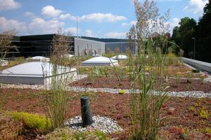 Extensive Dachbegrünungen sind naturnah angelegte Vegetationsflächen mit geringen Flächenlastenund minimalem Pflegebedarf