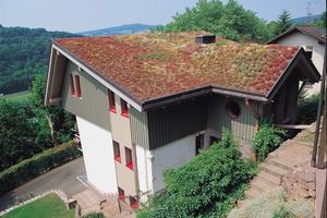 Auch auf geneigten Dächern können extensive Begrünungen zum Einsatz kommen