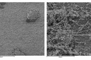 Die Langzeitstudie des Innsbrucker Mykon-Instituts belegt, dass silikatische Innenfarben und -putze geeignet sind, lange schimmelfrei zu bleiben. Der Blick durch das Mikroskop zeigt links eine silikatische Fläche nach 13 Monaten Versuchszeit – nahezu frei von Befall – und rechts die stark befallene Nullprobe