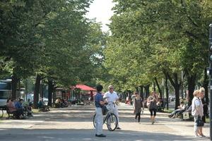Erhaltung, Optimierung und Ergänzung des Stadt- bzw. Straßenbaumbestands