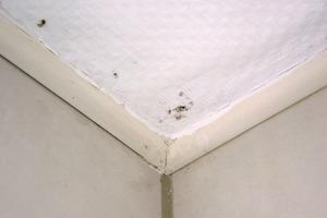 Beginnender Schimmelbefall in einer Ecke des Badezimmers: Bereits nach kurzer Zeit kann die befallene Stelle sich um ein Vielfaches ausdehnen. Hier sollte umgehend die Ursache ermittelt und abgestellt werden<br />