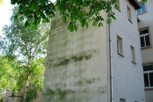 Kleinster gemeinsamer Nenner: Alle Technologien zur Entwicklung innovativer Beschichtungssysteme für Fassaden haben das Ziel, Algen und Pilze effektiv zu bekämpfen<br />